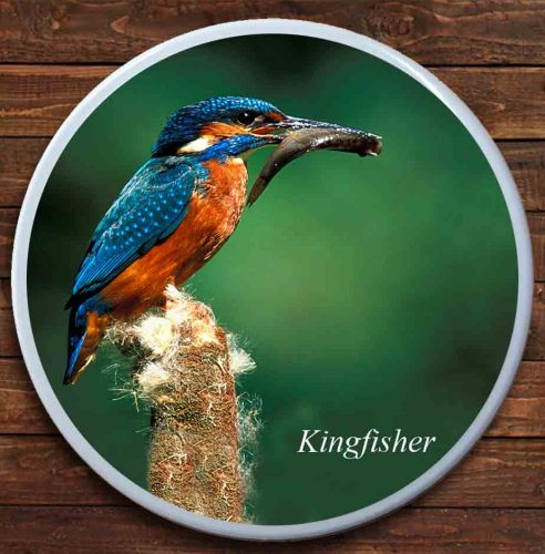 Kingfisher Ceramic Coaster
